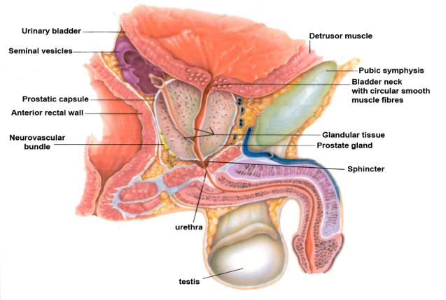 carcinoma della prostata psa racgp